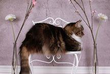 Billeder - Katte og dyr