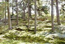 Garden: Woodlands