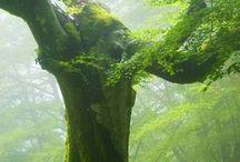 rainforest ideas2