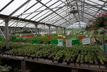 Greenhouses & Garden Sheds Galore / We love everything gardening, which includes home greenhouses, garden sheds, potting benches, and everything in between!