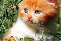 Коты, котята, кошки