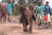 Kenya - elephants & other African animals
