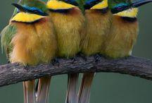 birds (photo)