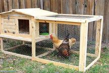 Phil's Chicken Coop