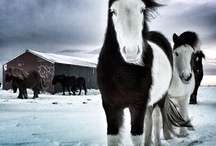 Horses - My Style Nature
