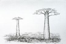 바오밥나무