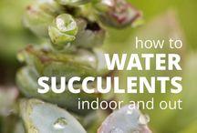 Succulent love ♡
