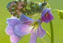 Bugs & Buterflies