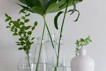 Plante inspiration