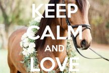 Keep calm hest