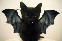 Boo*the Royal Black Cat