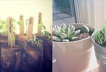 Gardening...other than pot