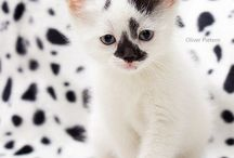 Cats & Kittens レ O √ 乇 ♥ / #cats #kittens / by Lisa Warren 👣 🌊 💋