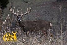 2015 Oak Creek Hitlist / Here are some of the bucks we will be looking for in the 2015 season. #monsterbuck #Oakcreekhitlist #huntofalifetime www.oakcreekwhitetailranch.com