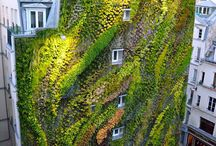 Living Walls / Also known as green walls and vertical gardens