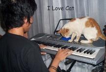lovecat :)