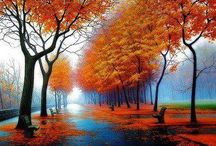 Autumn  / Leaves and colors!