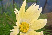 Beautyfull flowers / Beauty of flowers