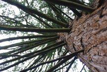 Alcsuti arboretum (utazasi naplo) / Itt megtalálhatod azokat a fotóimat amiket a természet szépségeiről készítettem.