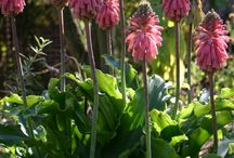 Różowe kwiaty - Pink flower