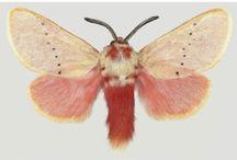 vlinders en motten