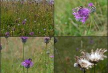 Wildflower meadow & patches / Wildflower meadows & patches.  Bee & butterfly friendly