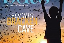 BATS Magazine / Members of Bat Conservation International receive a hard copy of our unique magazine, BATS, four times a year. This exclusive publication features the latest research, news, and topics about bats and bat conservation worldwide. Top bat scientists describe their work for BCI members and followers in a lively, informative style that takes readers right into caves, forests, jungles and deserts to explore the always fascinating world of bats.