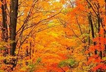 NATURALEZA MONI / Los colores del otoño iluminan los ojos que admiran su belleza