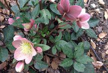 Gorgeous garden plants
