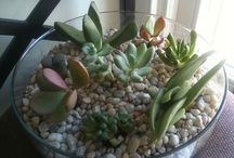 succulents / so much to learn...