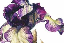 Art - botanical / Paintings, drawings, close-up photos of plants