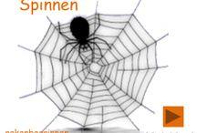 Spinnen/herfst