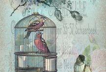 kuş kafesi resimleri