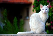 Pielęgnacja kotów / Wszystko o pielęgnacji kotów