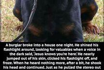 Christian Animal Stories