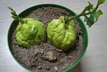 légume du jardin