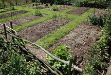 Tuinieren moestuin