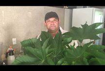 cuidando da plantas