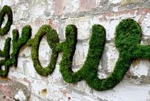 Moss Growing DiY