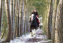 Horses / Great horse photos / by Karen McCloud