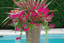 Combo Planters / Ideas for making up beautiful combination planters.