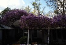 Favorite Settings in Chatham County, NC / by CVB Chatham County N.C.