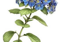draw herbal