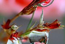 Kapky rosy a vody