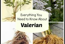Valerian root / Hetb