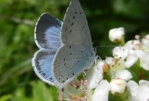 borboletas, libelulas e  afins