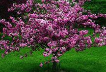 beautiful ornamental trees
