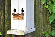 Tiny houses - Birdhouses