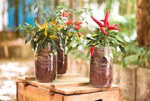piante in vaso di vetro