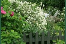 Garden / garden,green,flower